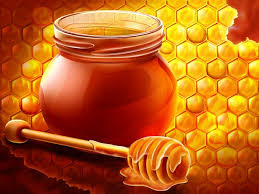 مشروع تربية النحل في السعوديه