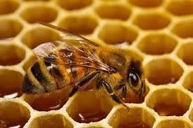 تجربتي مع تجارة العسل